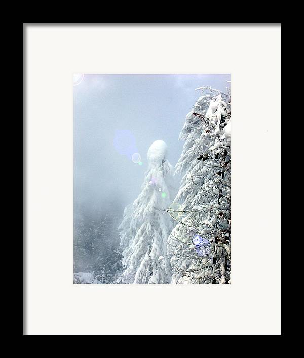 Landscape Framed Print featuring the photograph Snowy Trees by Kae Cheatham