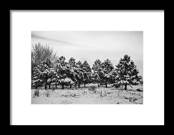 Snow Framed Print featuring the photograph Snowy Winter Pine Trees In Black And White by James BO Insogna