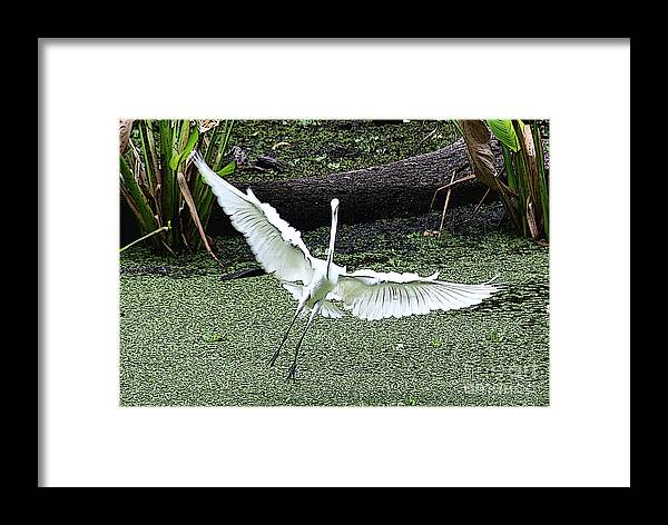 Egret Framed Print featuring the photograph So Happy by Rosemary Aubut