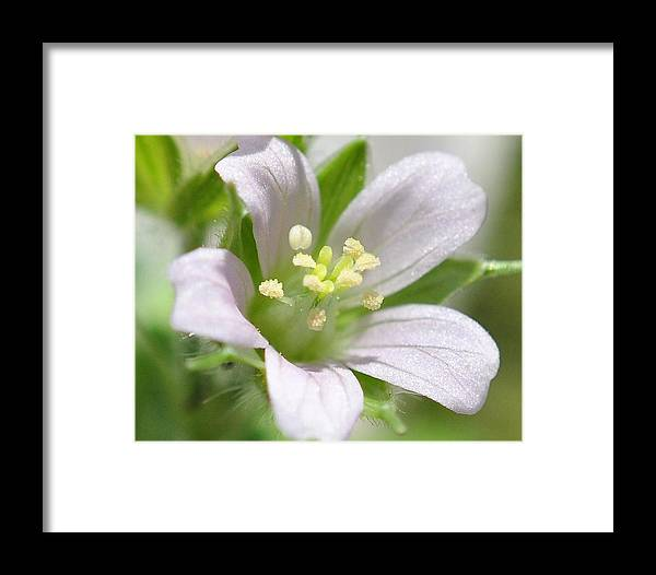 Flowers Framed Print featuring the photograph Soaking It Up by John Blanchard