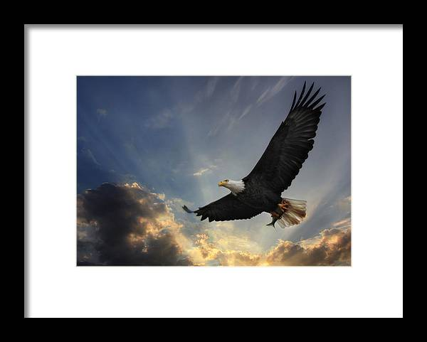 Bird Framed Print featuring the photograph Soar to new heights by Lori Deiter