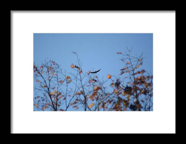 Bird Framed Print featuring the photograph Soaring In Autumn by Meg Reinink
