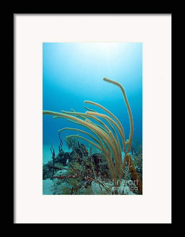Absence Framed Print featuring the photograph Soft Coral Underwater by Sami Sarkis