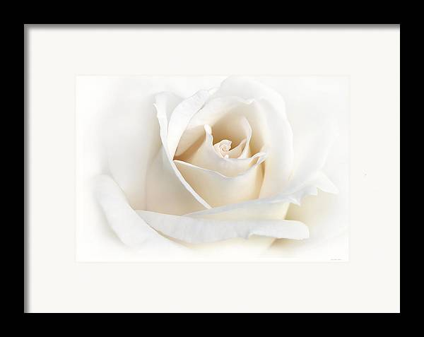 Rose Framed Print featuring the photograph Soft Ivory Rose Flower by Jennie Marie Schell