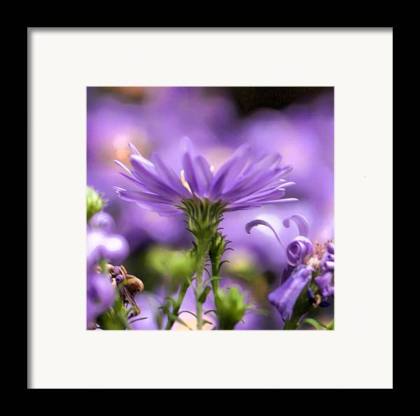 Flower Framed Print featuring the photograph Soft Lilac by Leif Sohlman