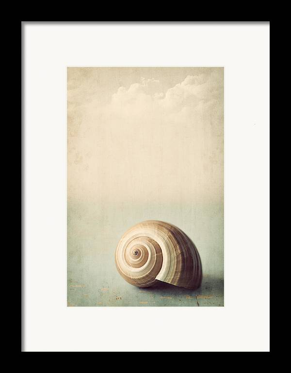 Shell Framed Print featuring the photograph Sojourn by Amy Weiss