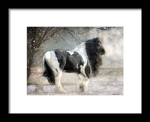 Horse Photographs Framed Print featuring the photograph Solitary by Fran J Scott