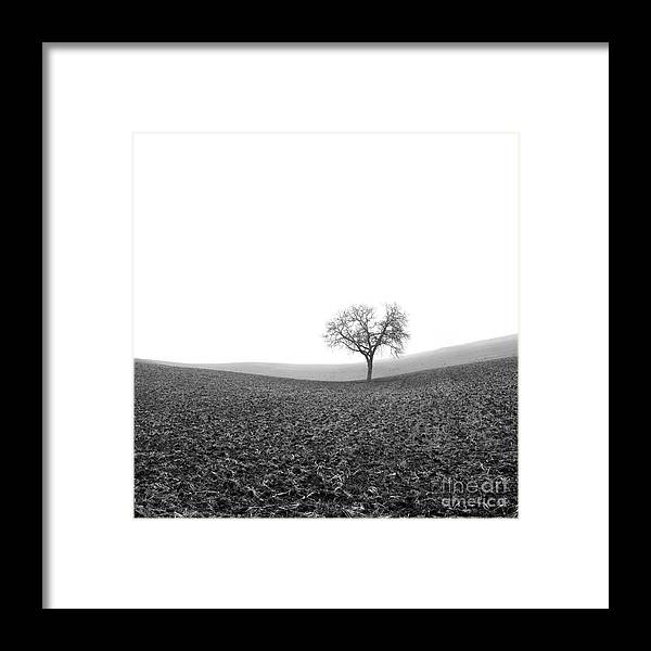 Wintry Framed Print featuring the photograph Solitary Tree In Winter. Auvergne. France by Bernard Jaubert