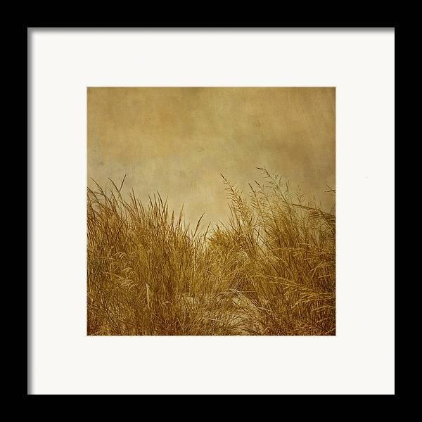 Beach Framed Print featuring the photograph Solitude by Kim Hojnacki