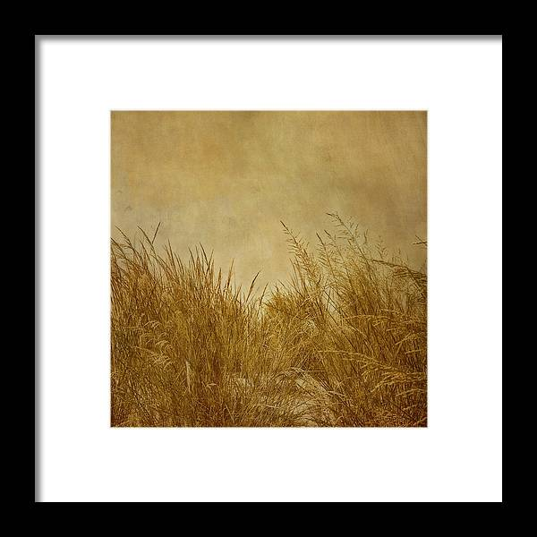 Beach Framed Print featuring the photograph Solitude by Kim Hojnacki