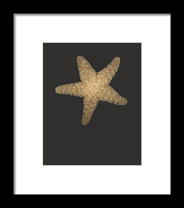 Starfish Framed Print featuring the photograph Solo Starfish I by Suzanne Gaff