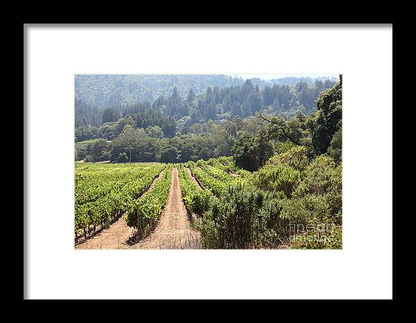 Vineyard Framed Print featuring the photograph Sonoma Vineyards In The Sonoma California Wine Country 5d24518 by Wingsdomain Art and Photography
