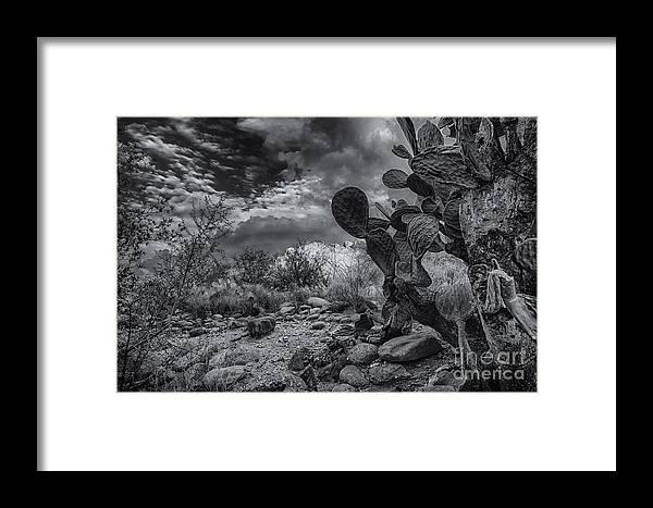 2013 Framed Print featuring the photograph Sonoran Desert 15 by Mark Myhaver