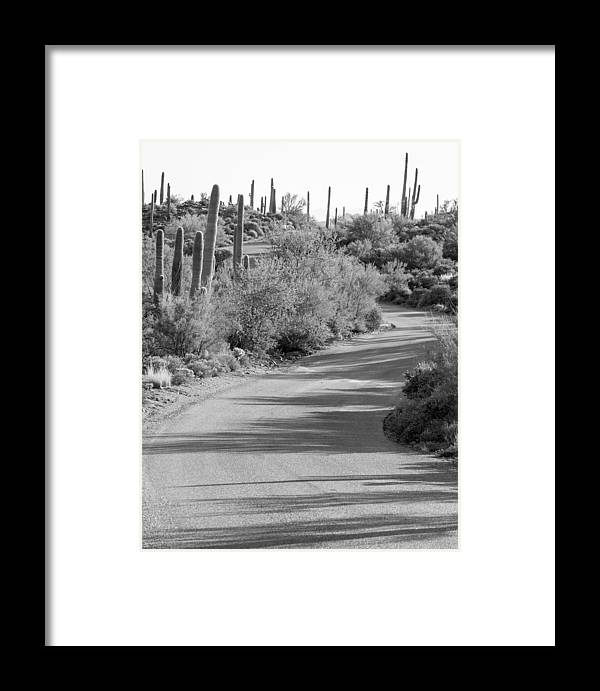 Sonoran Desert Framed Print featuring the photograph Sonoran Drive by Aaron Burrows