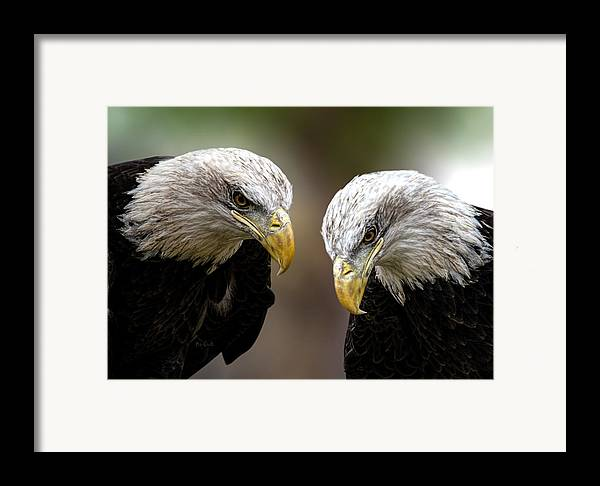 Eagles Framed Print featuring the photograph Soul Mates by Bob Orsillo