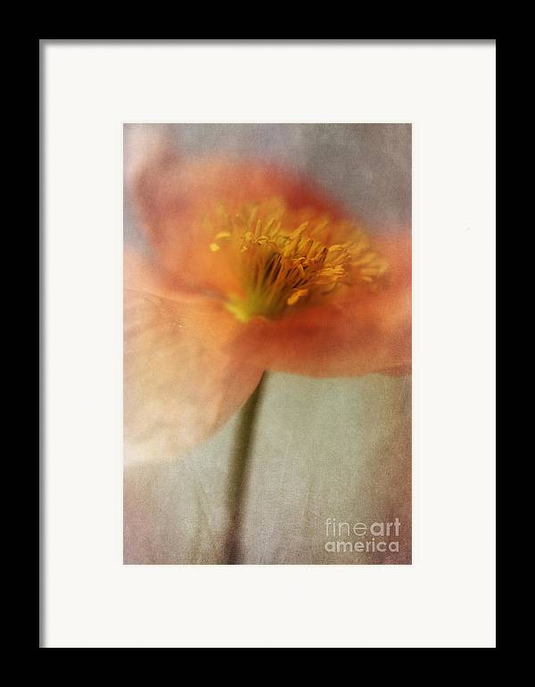 Abstraction Framed Print featuring the photograph Soulful Poppy by Priska Wettstein