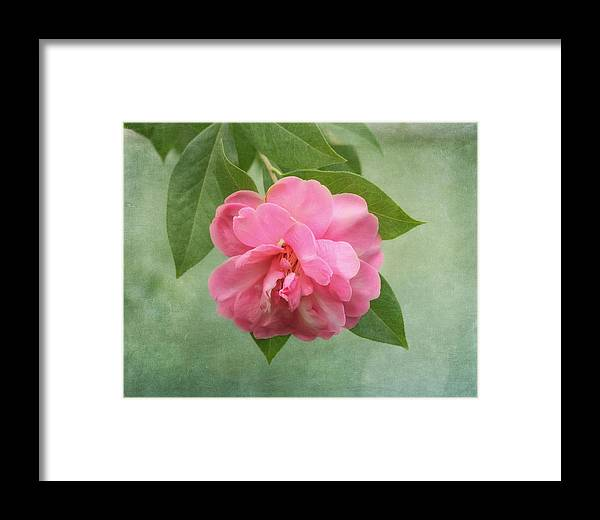 Flower Framed Print featuring the photograph Southern Camellia Flower by Kim Hojnacki