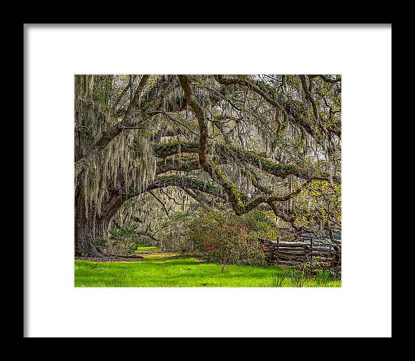 Charleston Framed Print featuring the photograph Southern Charm by Steve DuPree