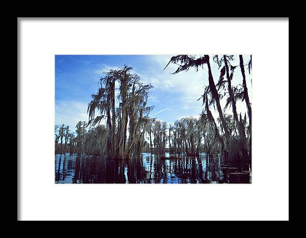 Cypress Framed Print featuring the photograph Southern Lake by Joshua Snead