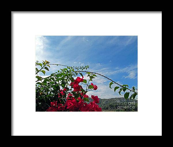 Flowers Framed Print featuring the photograph Spanish Bougainvillea by Tina M Wenger