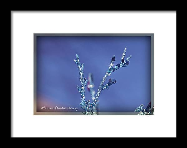 Art Framed Print featuring the photograph Sparkly 2 by Michaela Preston