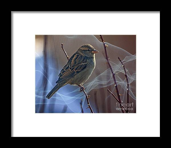 Sparrow Framed Print featuring the photograph Sparrow In A Weave by Janice Pariza