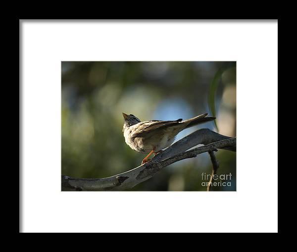 Bird Framed Print featuring the photograph Sparrow by Jacklyn Duryea Fraizer