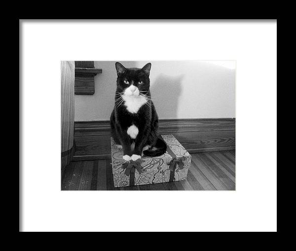 Cat Framed Print featuring the photograph Spencer by Katharine Mahoney