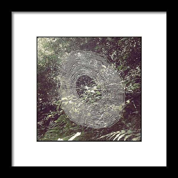 Beautiful Framed Print featuring the photograph Spider by Raimond Klavins