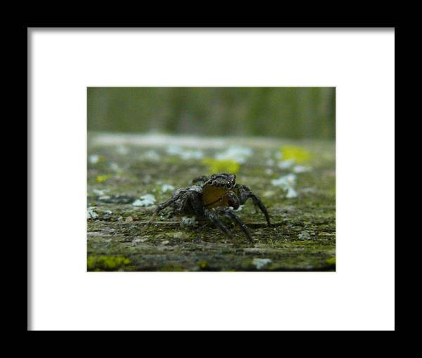 Spider Framed Print featuring the photograph Spider by Steven Woodard