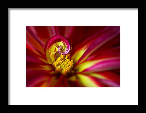 Background Framed Print featuring the photograph Spiral by Mary Jo Allen