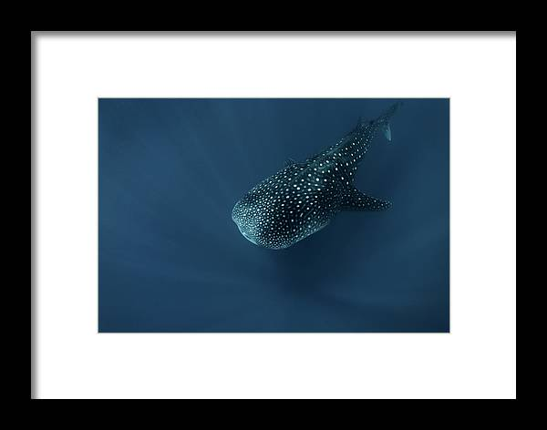 Maldives Framed Print featuring the photograph Spirit Of Deep Water by Andrey Narchuk