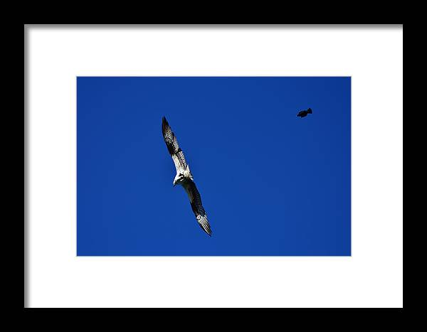 Osprey Framed Print featuring the photograph Spitfire Vs Bomber by Dennis Blum