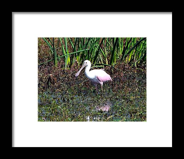 Bird Framed Print featuring the photograph Spoonful by Steve Griffin