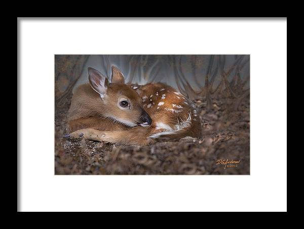 Fawn Framed Print featuring the photograph Spotted Innocence by Don Anderson
