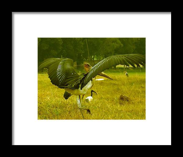 Bird Framed Print featuring the photograph Spread Your Wings by Tuntufye Abel
