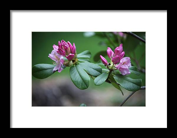 Flower Framed Print featuring the photograph Spring Bloom by Dervent Wiltshire