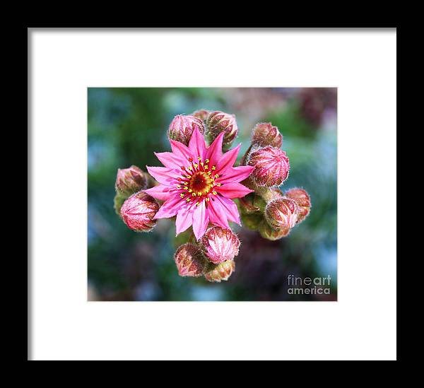 Flower Framed Print featuring the photograph Spring Bloom by Steven Baier