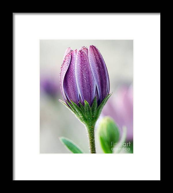 Spring Framed Print featuring the photograph Spring Bloom With Morning Dew by Eddie Yerkish