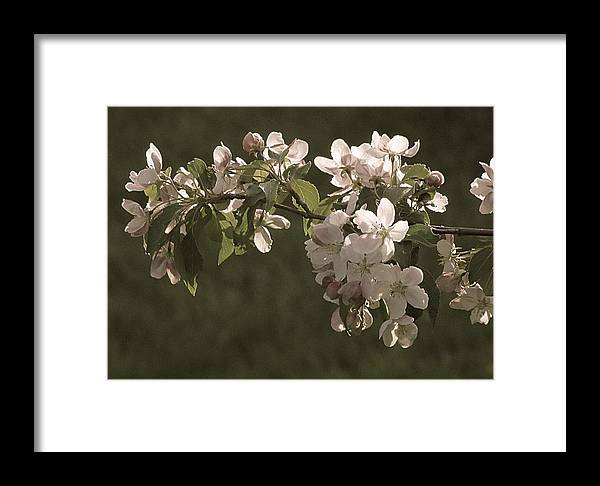 Flowers Framed Print featuring the photograph Spring Blooms by Monnie Ryan