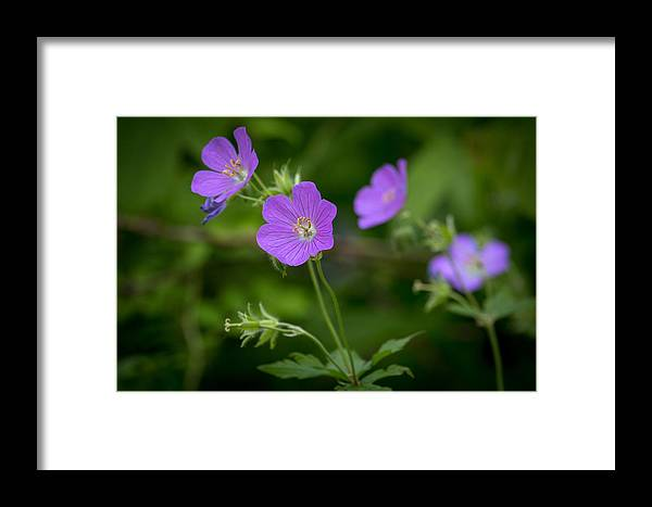 Purple Framed Print featuring the photograph Spring Blooms by Renae Martin