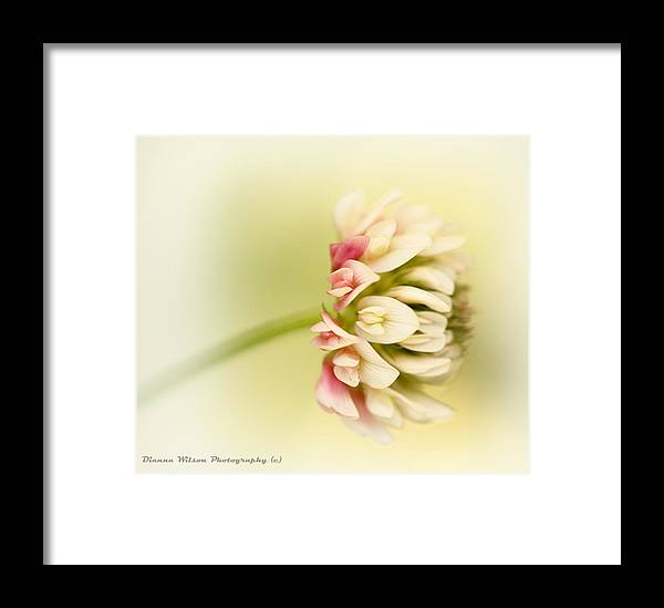Clover Framed Print featuring the photograph Spring Clover Blossom by Dianna Wilson