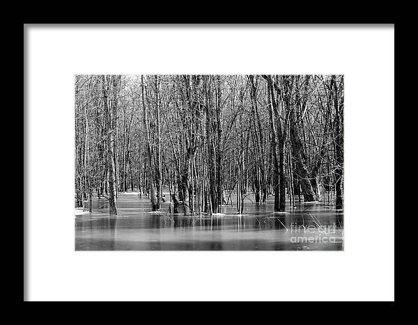 Nature Framed Print featuring the photograph Spring Flooding by Sophie Vigneault