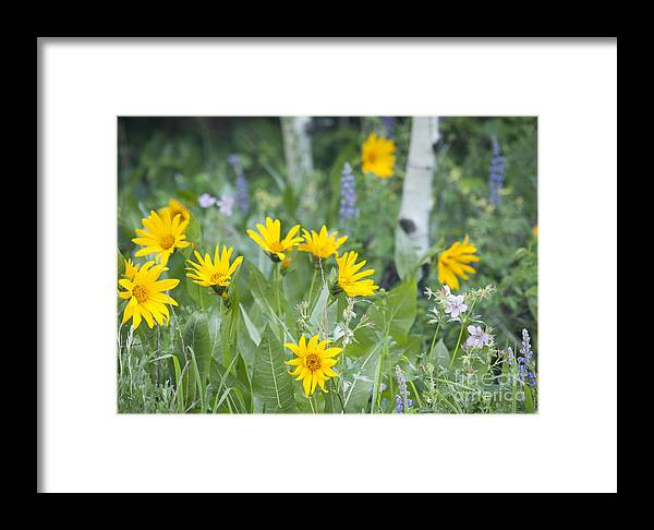 Arrow-leaved Balsamroot Framed Print featuring the photograph Spring Flora by Idaho Scenic Images Linda Lantzy
