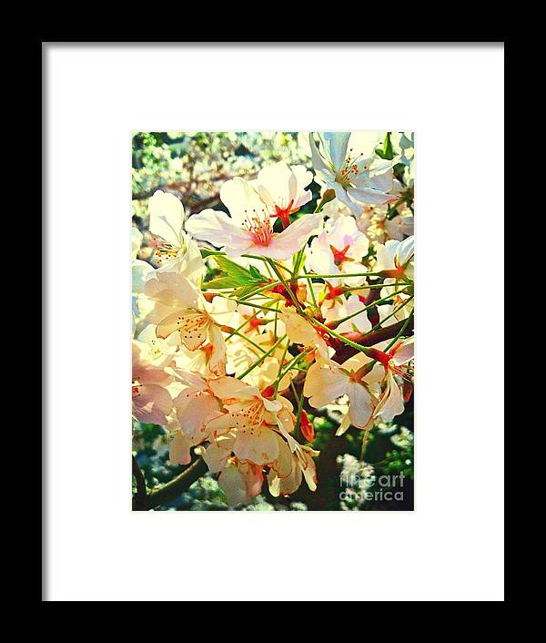 Flowers Framed Print featuring the photograph Spring Flowers 27 by Jude Monteleone