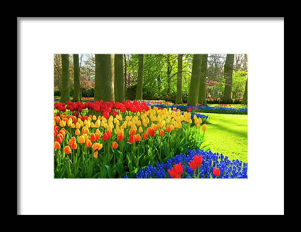 Flowerbed Framed Print featuring the photograph Spring Flowers In A Park by Jacobh