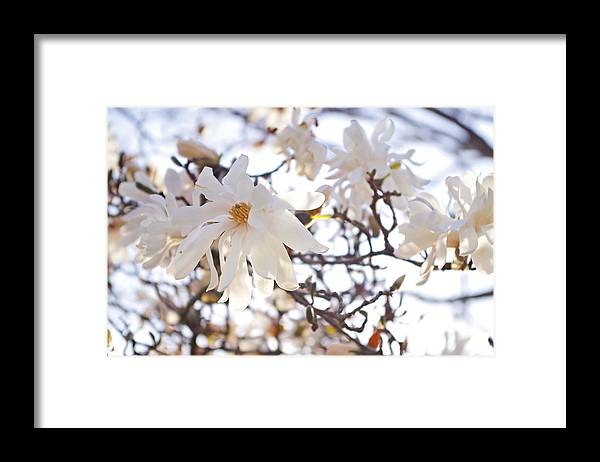 Magnolia Stellata Framed Print featuring the photograph Spring Flowers by Sharon Popek