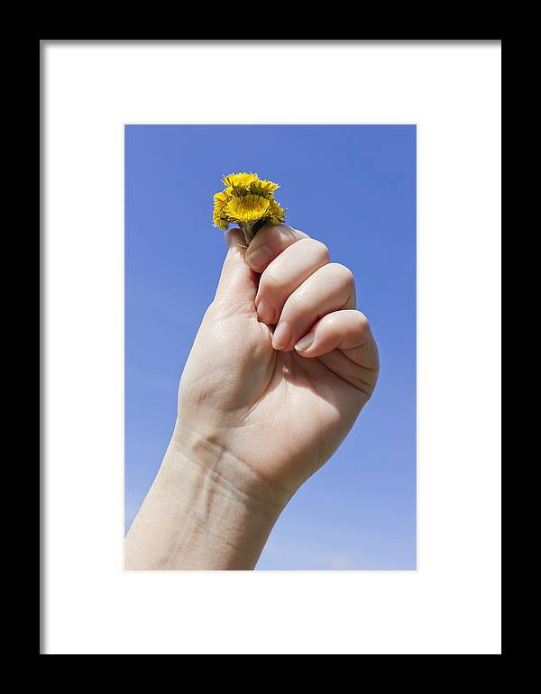 Flowers Framed Print featuring the photograph Spring Hand by Aleksandr Volkov