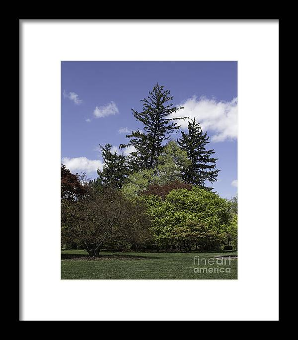 Botany Framed Print featuring the photograph Spring Has Arrived by Arlene Carmel
