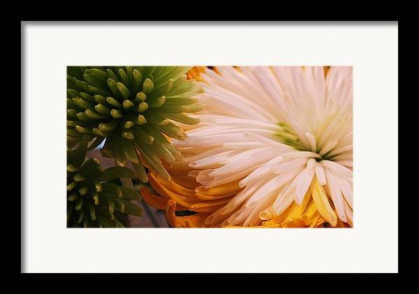 Spring Framed Print featuring the photograph Spring Has Sprung II by Anna Villarreal Garbis
